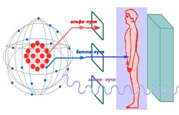 Презентация Влияние радиоактивного излучения на живые организмы ...